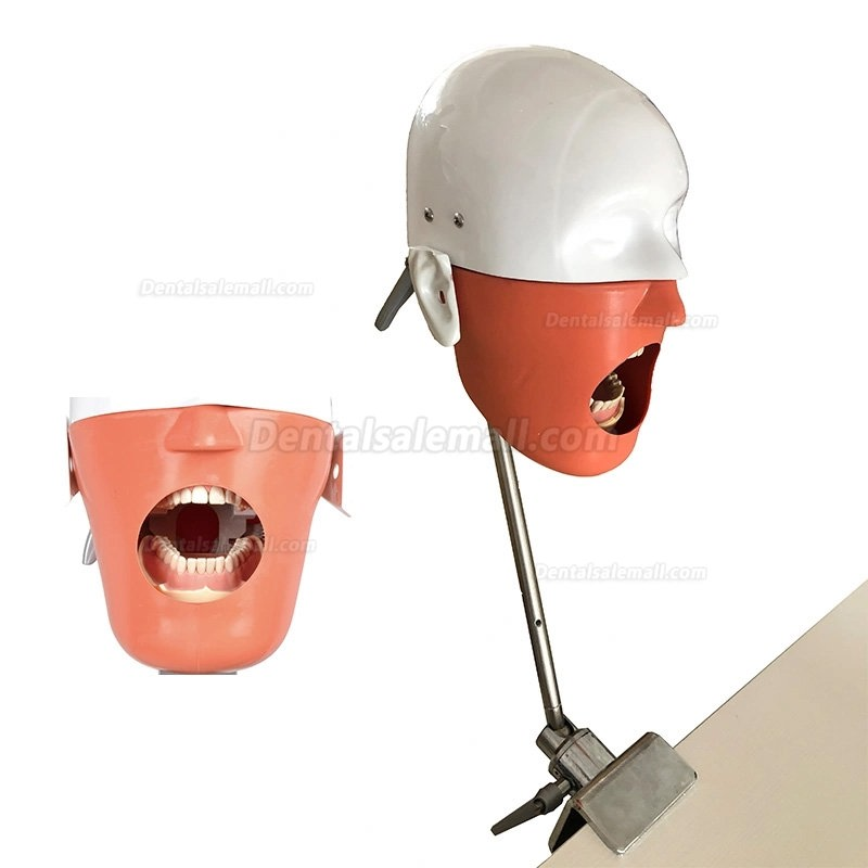 Dental Training Manikin Phantom Head Bench Mount  Dental Simulators